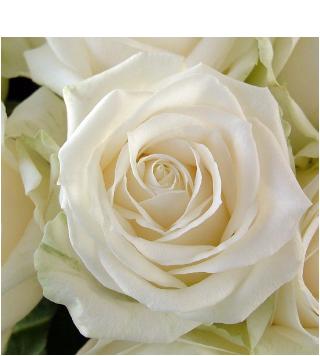rouwbloemen-contact